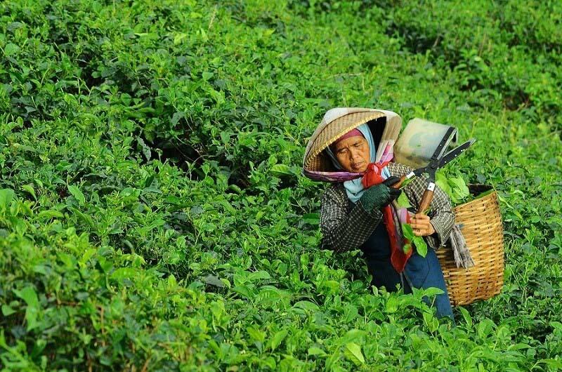 La esclavitud de las mujeres rurales