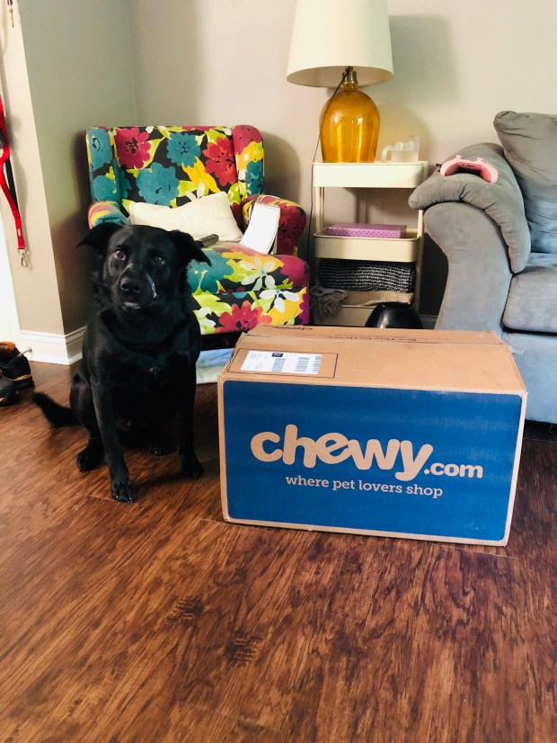 Chance with Chewy box
