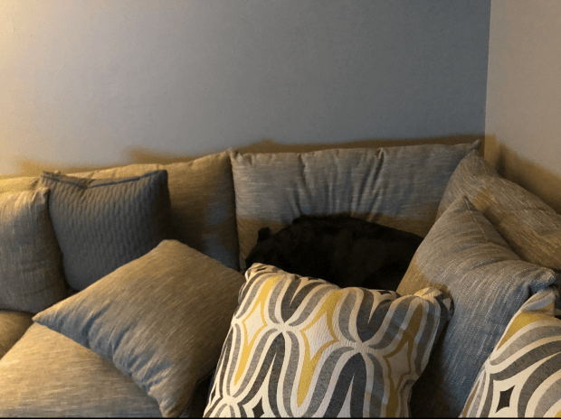 Chance hiding in couch