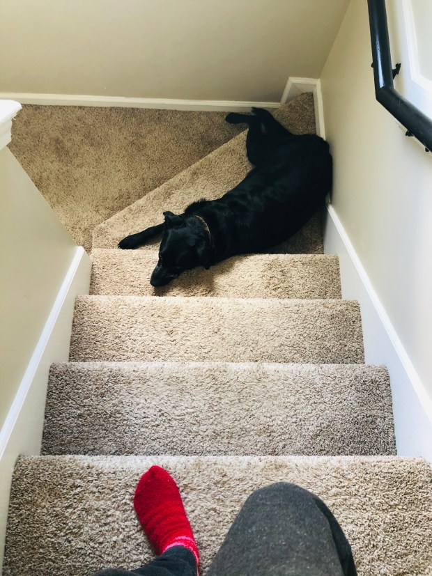Chance sleeping on stairs