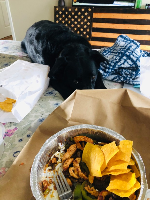 Mexican food in bed with dog