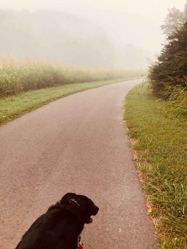 Dog walking in fog