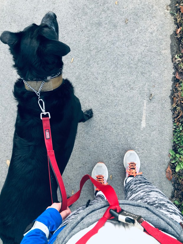 Running outfit and dog