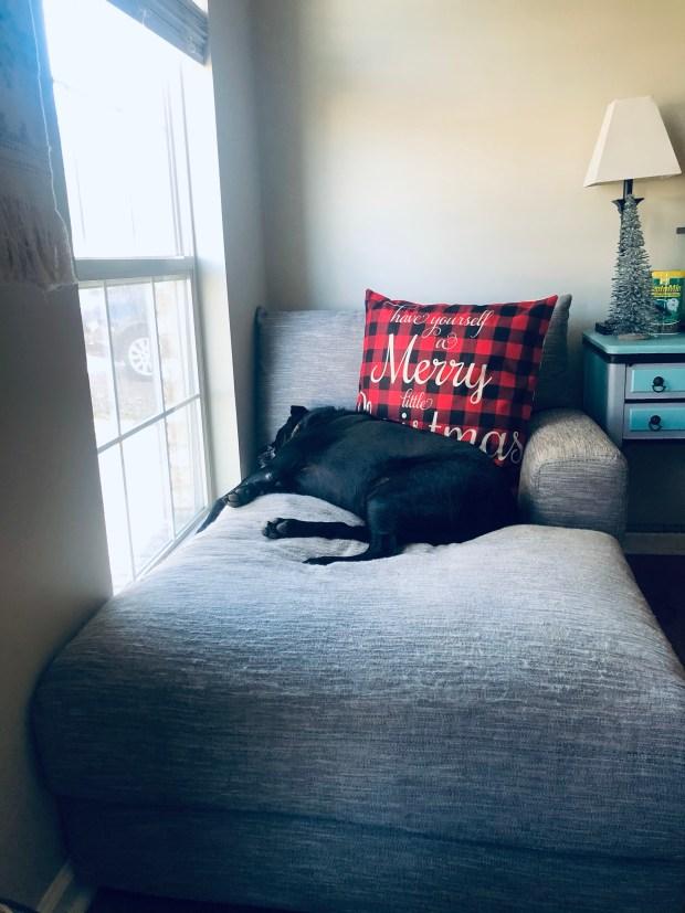 Chance sleeping on chair