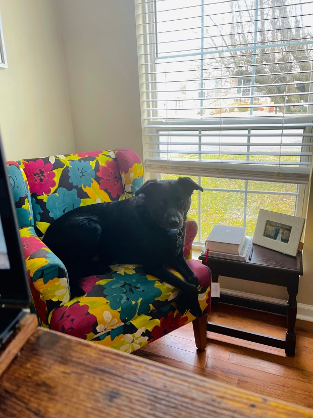 Dog sitting in chair in home office