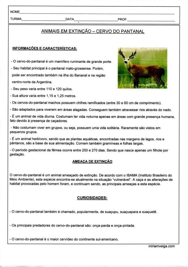 Animais em extinção-Cervo do Pantanal-Parte 1