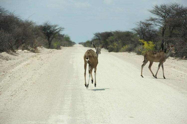 Namibia wildlife-10