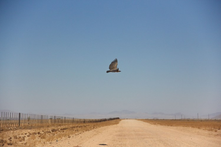 Namibia wildlife-19
