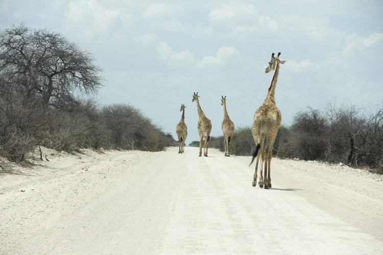 Namibia wildlife-9