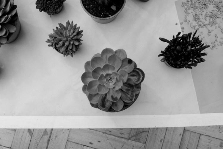 urban-gardens-10