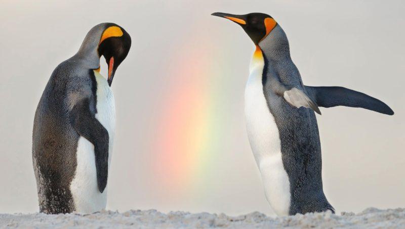 Какой дистрибутив Linux попробовать новичку?