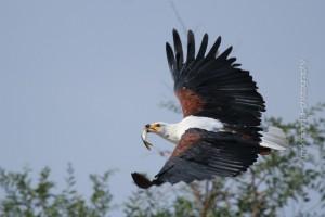 Vögel_MF-14