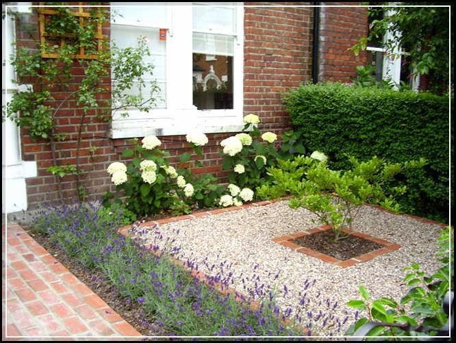 vous avez une pluriannuelle Hiver Dure vivace pour le jardin Avec le soleil