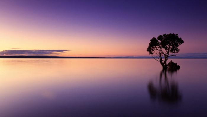 Tree in body of water with horizon in the distance.