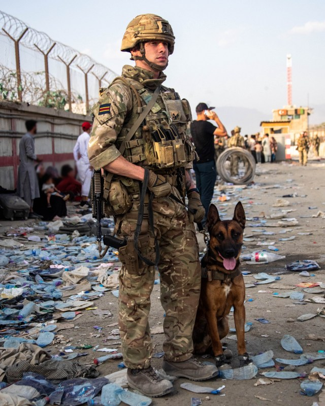Military working dogs have been sent to Kabul to assist with Op PITTING.