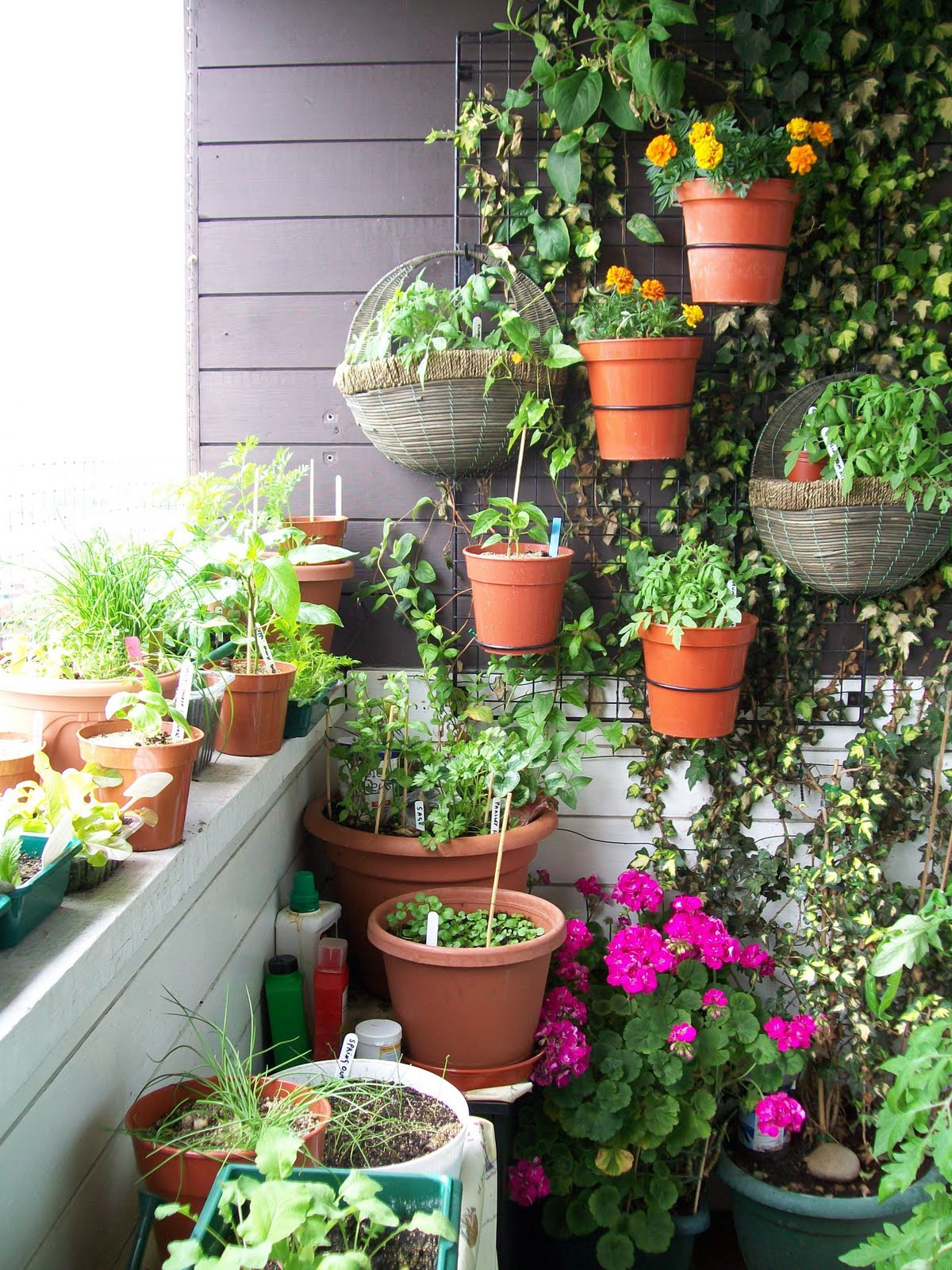 5 Tips To Landscaping Small Balconies Huzzpa Stories