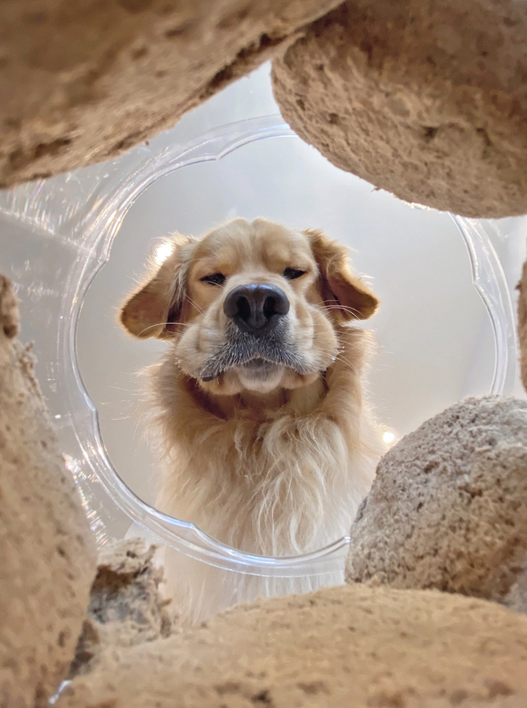 A camera placed inside a bucket of treats shows a golden retriever with stuffed cheeks and an eager expression gazing inside