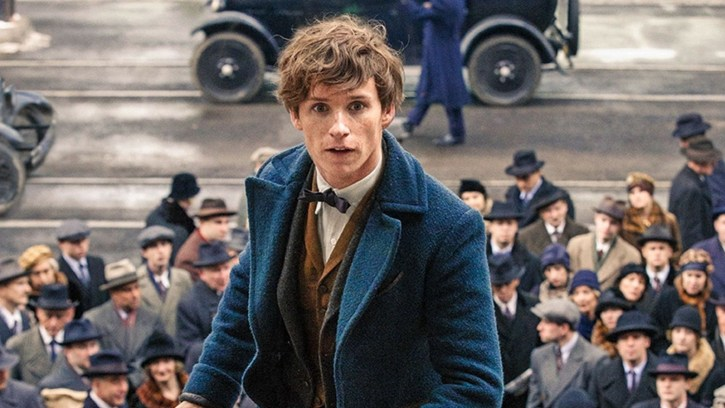 Fantastic Men and Where to Find Them: The Gentle Masculinity of Newt Scamander | by Sofia Boulamrach | Medium
