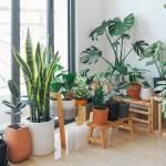 Gardening Made Happily Indoor Plants For Beginners By Samyu Varsh Lavender Minted Medium