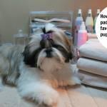 How Can I Potty Train My Shih Tzu By Sandra Mcgonigal Medium