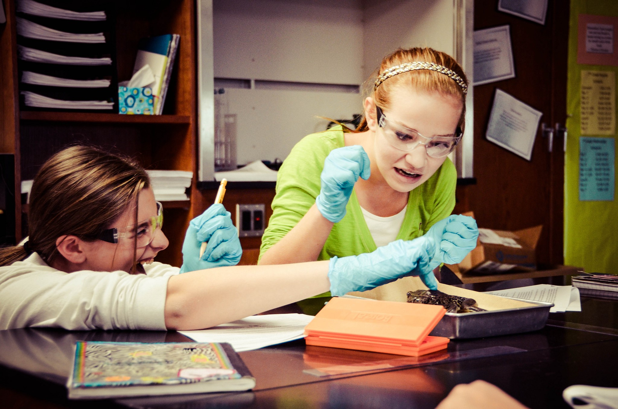 Frog Dissections And Virtual Reality