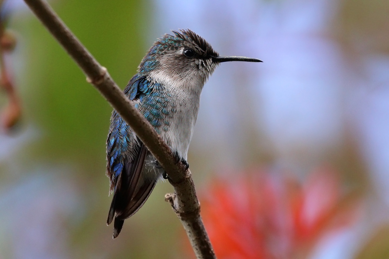 Hummingbird Migrate Or Hibernate
