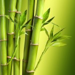 Why Are Bamboo Stalks Lucky My Dearest Feng Shui Fans By Harry Tran Medium