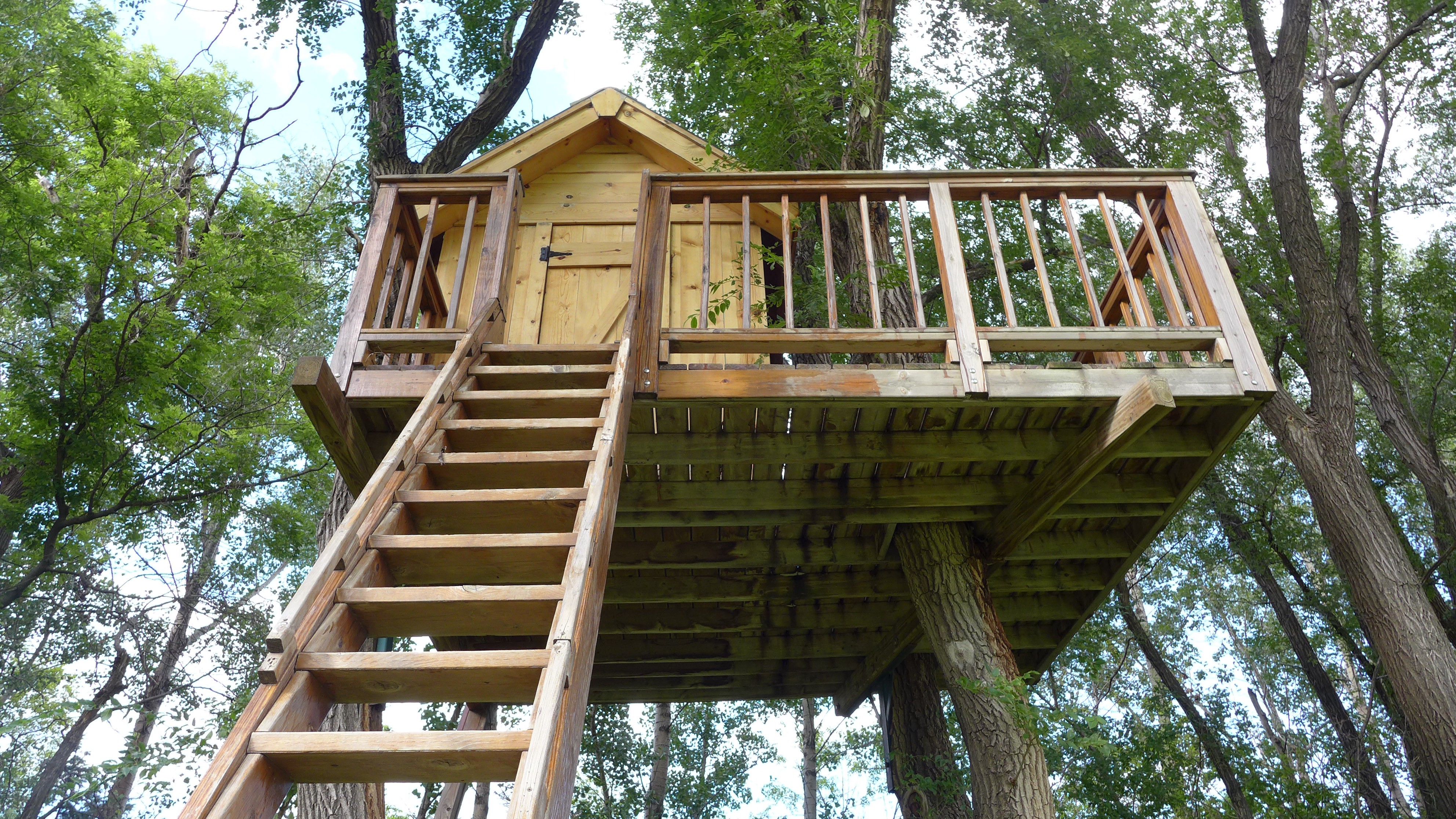 The Best Trees For Building Treehouses By Sara Thompson Medium