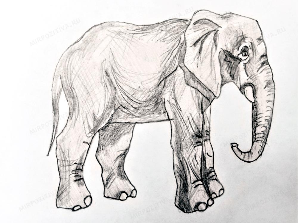 Egy elefánt ceruza rajza