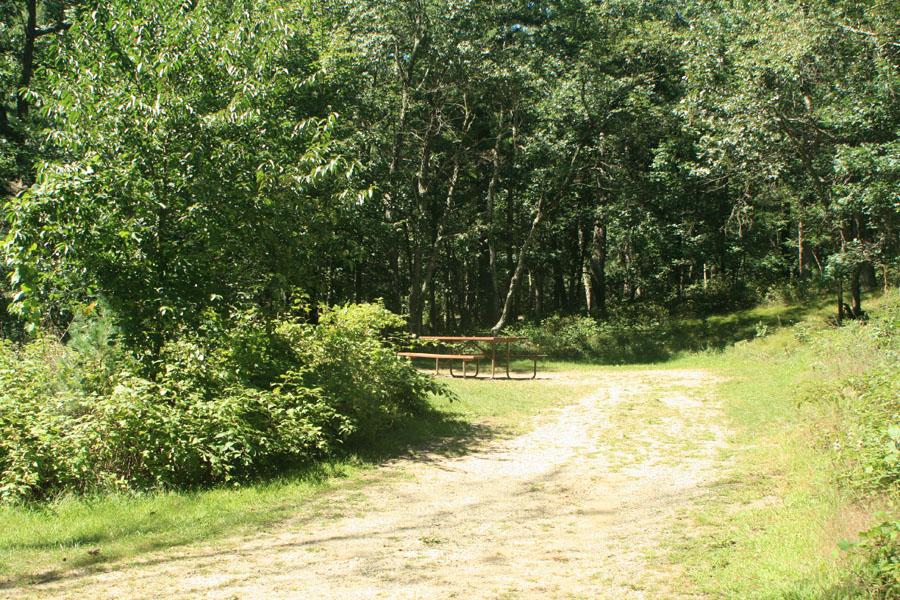 Site 95