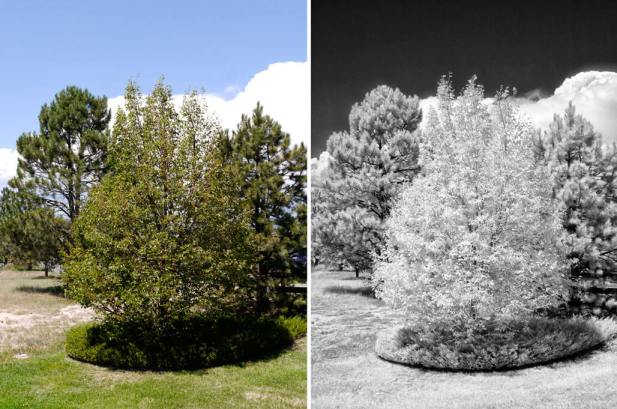 mirrorless infrared photography