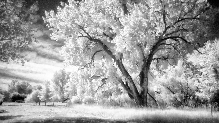 Shooting Infrared with the Lumix GX8