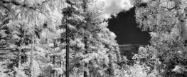 Tips for Capturing the Infrared Landscape