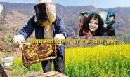 मधुमक्खी पालन में गौमूत्र के प्रयोग से मिल रहे हैं क्रांतिकारी परिणाम, पढ़िए डा. रुचिरा का शोध