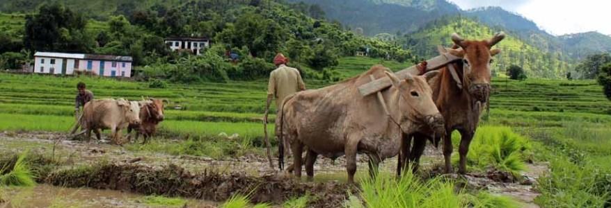 उत्तराखंड – किसानों और युवाओं के हित में 26 जनवरी से बड़ी योजना, पढ़िए पूरी खबर