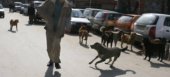 उत्तराखंड : पुलिस कस्टडी से भागा आरोपी, लेकिन आवारा कुत्तों ने पकड़वाकर फिर पहुंचा दिया हवालात