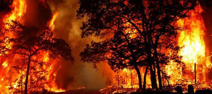 Breaking News उत्तराखंड : जंगल की आग से 55 हजार का नुकसान, 6 मवेशी जिंदा जले
