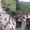 उत्तराखंड : मछली पकड़ने नदी में कूद पड़े हजारों लोग, किया एक विशेष पावडर का इस्तेमाल