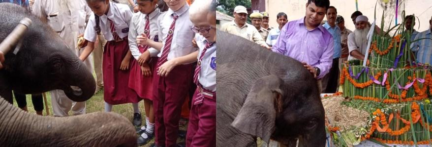 उत्तराखंड : कार्बेट पार्क में मनाया गया हाथी के बच्चे का पहला जन्मदिन, विशेष केक भी था तैयार