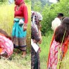 Uttarakhand जब खेत में फसल काटने पहुंची रुद्रप्रयाग डीएम वंदना सिंह, इलाके के लोग देखकर रह गए हैरान