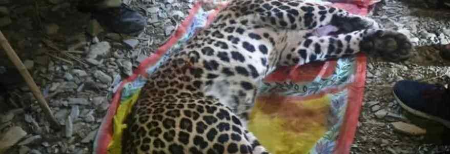 Uttarakhand महिला को शिकार बनाने वाले गुलदार को शिकारी ने किया ढेर, 10 घंटे पहले महिला को निवाला बनाया था