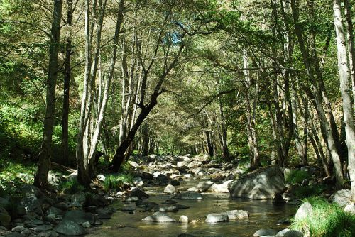 Weekly Writing Challenge: Mapping A Journey Of Love... Carmel River