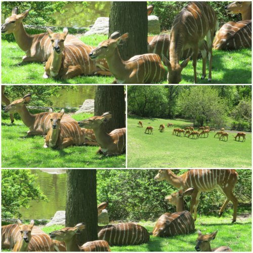 Weekly Photo Challenge: Home… Nyala at Home