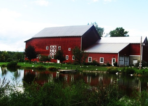 Weekly Photo Challenge: Home… A Duck Farm home
