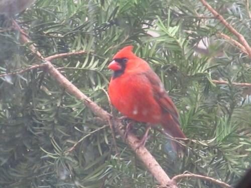 wintering  birds in our yard