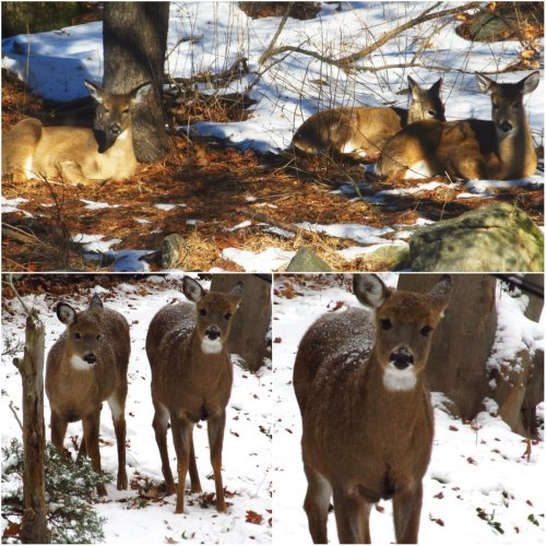 Weekly Writing Challenge: Haiku In Threes house deer