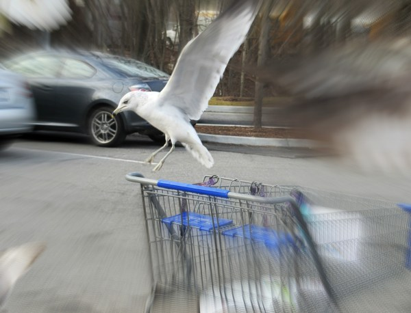 Photo 101-Week 3: From Color to Landscape - Seagull in mid-flight