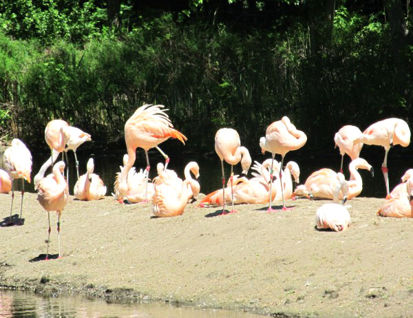 Photo 101-Week 3: From Color to Landscape - Swarm of Pink Flamingos