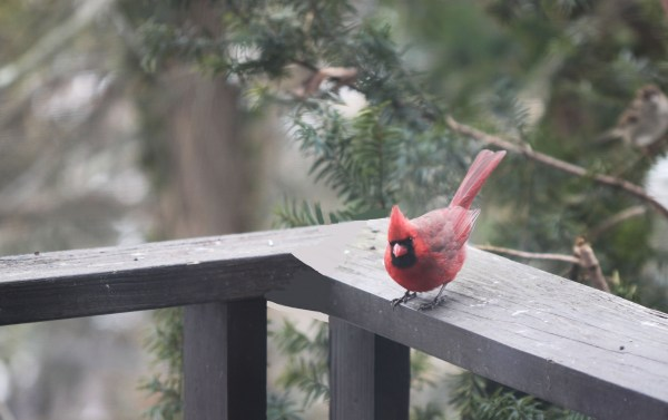 From A Journey Through Fog... A Cardinal's trust