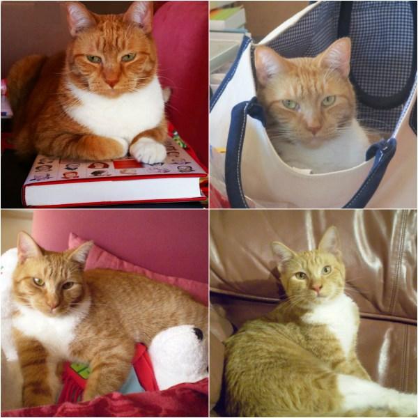 Haiku: National Pet Day - Tangy Cat we love you